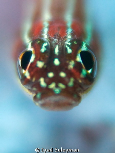 Goby Portrait by Iyad Suleyman 